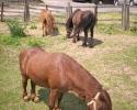 pony_ruhla_aussicht3