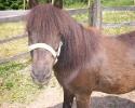 pony_ruhla_aussicht33
